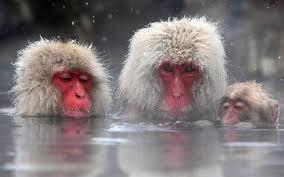 236: Macaque