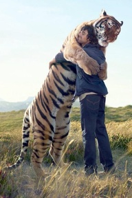 234: Hugging the tiger within